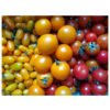 Bio Mini-Tomaten Mix, 300g