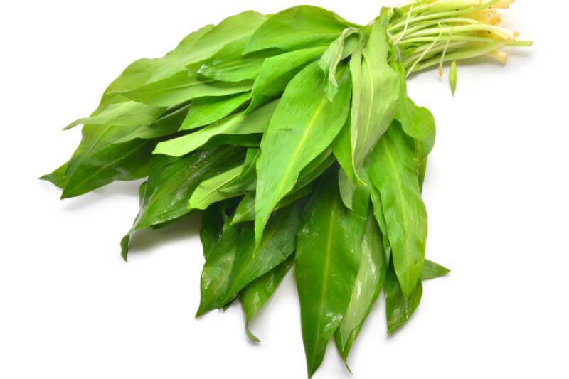 ramson leaves isolated on white, allium ursinum