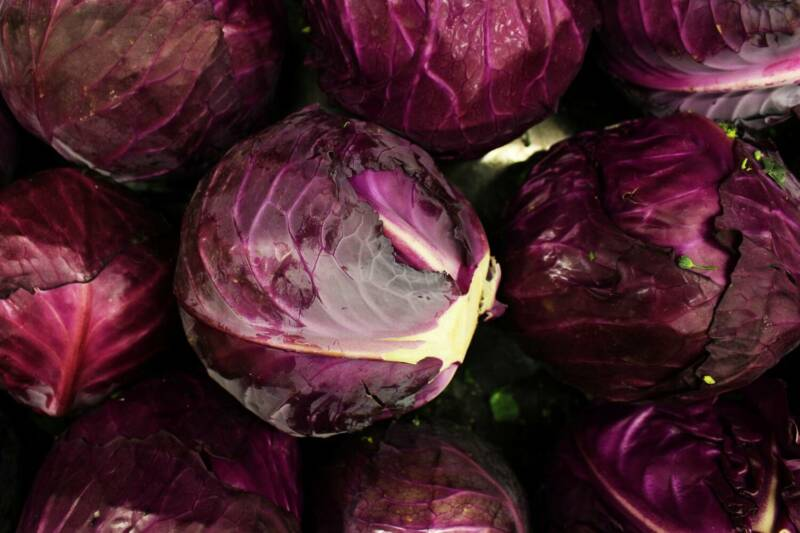 the-purple-cabbage-5318959_1920